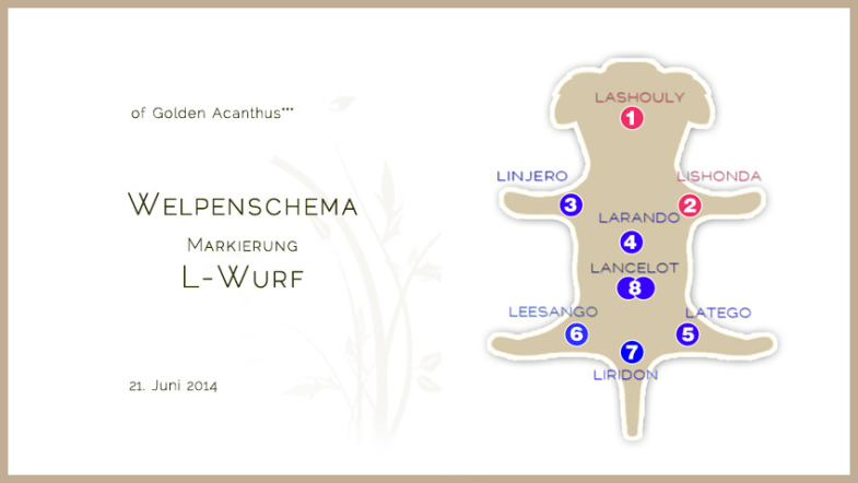 Welpenschema_quer_L-Wurf