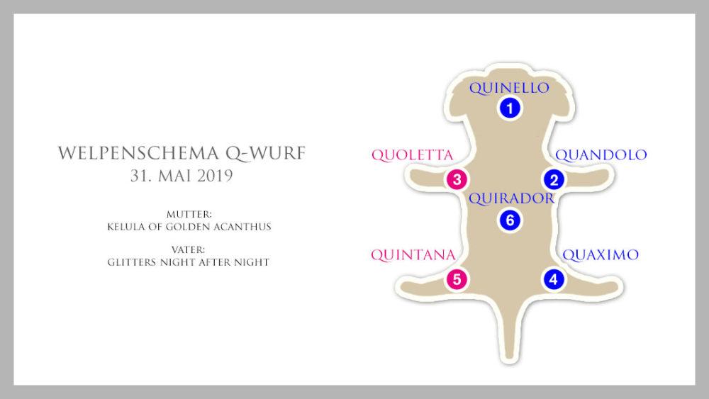 Welpenschema Q-Wurf