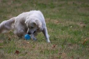 Horena apportiert den Ball