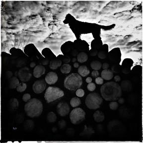 Kelula-Holzstapel-Web